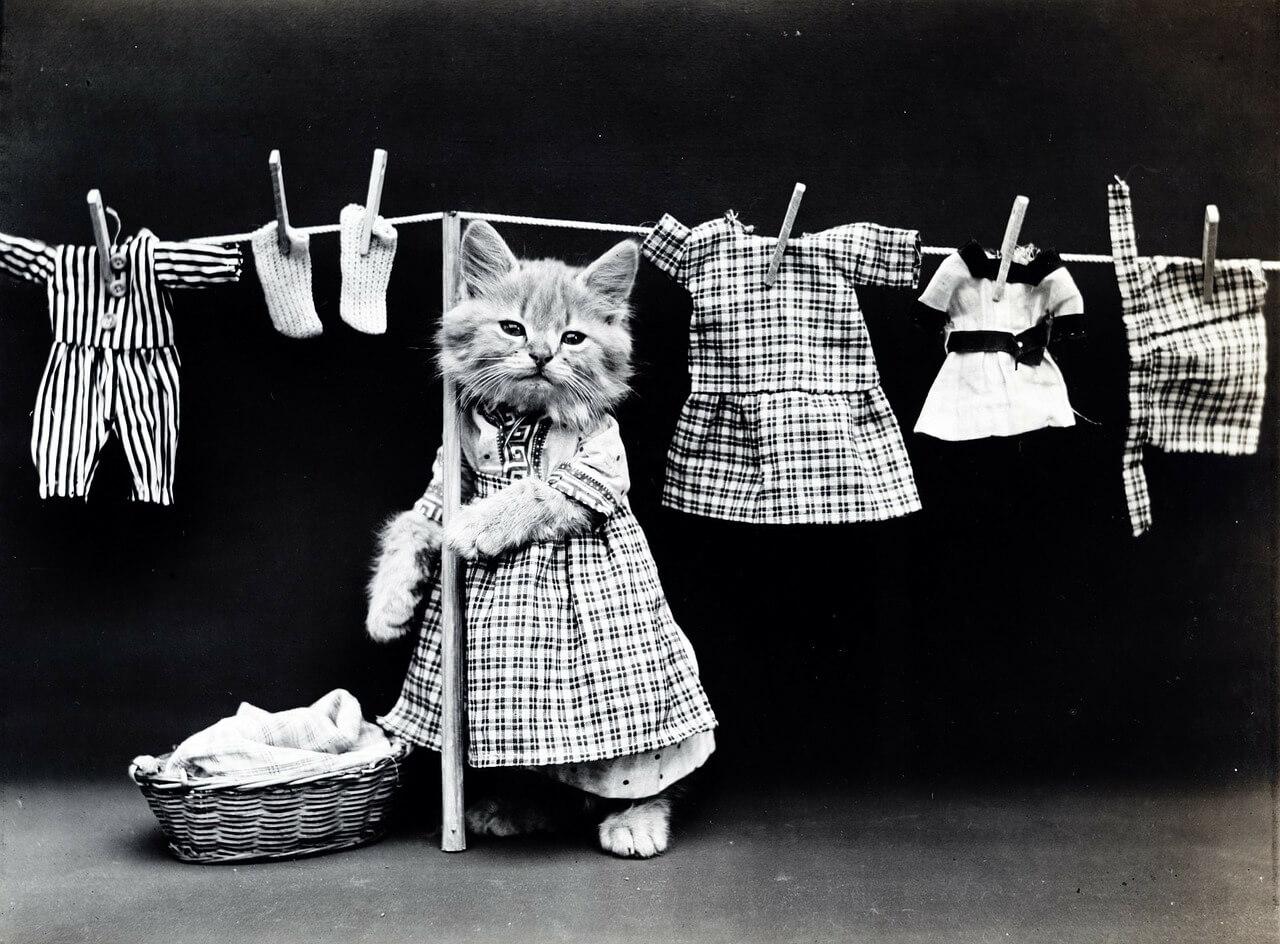 洗濯する猫