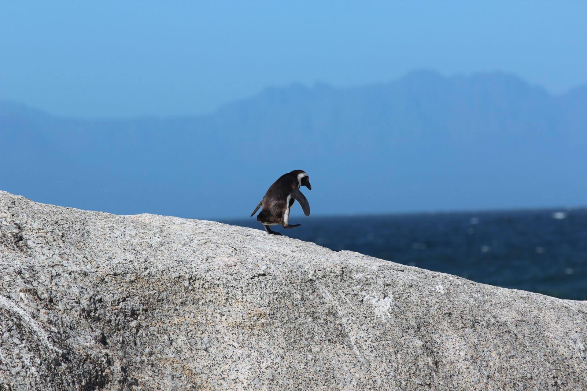 飛び込む前のペンギン